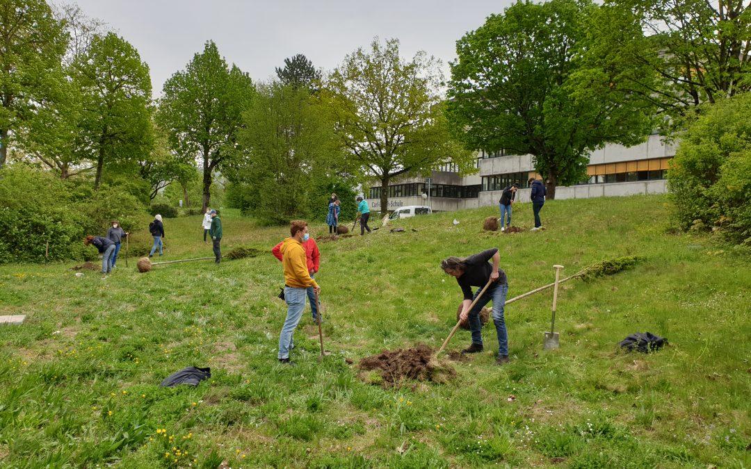 Das BNE-Team forstet auf. Neue Bäume für die MBS